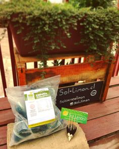 Nuevo cargamento de #clorofila de Jugo de Pasto de Trigo o #wheatgrass en…