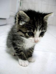 cute little cat