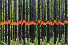 Afterburn, a space by Civilian Projects, explores how landscapes change over time. To represent a post-fire forest, the Brooklyn-based art and architecture studio installed charred spruce poles marked with bands of bright orange paint in a grid of ash-covered soil. As the garden matures, new plants will fill in and eventually take over, mimicking what happens in the natural world.