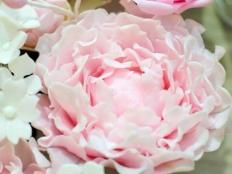Fotopostup PIVONKA - foto postup Gum Paste, Rose, Fondant, Birthday Ideas, Flowers, Magnets, Decorations, Pink, Roses