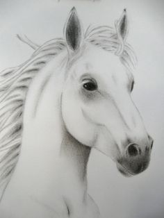 "Original Horse Sketch - Charcoal 11""x14"" on Etsy, $35.00"