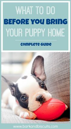 How to prepare your home for a puppy-complete guide via @KaufmannsPuppy
