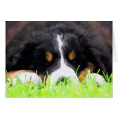 Bernese Mountain Dog Puppy Greeting Card - dog puppy dogs doggy pup hound love pet best friend