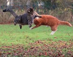 Wanna Fight In The Air? Two Can Play That Game. | Community Post: 20 Cats That Would Kick Your Ass