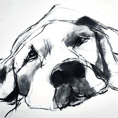 Valerie Davide, Dog - William Stafford - Brands One Kings Lane Animal Paintings, Animal Drawings, Art Drawings, Weimaraner, Art And Illustration, Dog Portraits, Dog Art, Painting & Drawing, Dog Lovers
