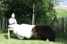 Boeddha icm een Schapenvacht van http://www.schaapsvacht.nl