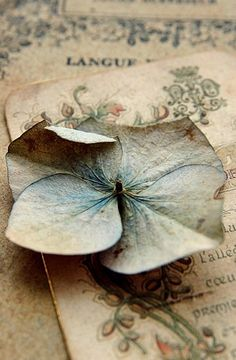 French ephemera and dried hydrangea petal ~ beautiful colours and shades Blue Cream, Blue And White, The Magic Faraway Tree, Eye Candy, Paperclay, Duck Egg Blue, French Blue, Belle Photo, Simply Beautiful