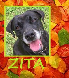 ZITA, chien du mois de novembre 2016  https://refugecaninlotois.wordpress.com/2015/05/05/zita-nouvelles-photos/