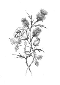 Sparkling Rose And Thistle Tattoo 2019 Back To Rose And Thistle TattooThistle Tattoo Compelling Rose And Thistle Tattoo, Black Thistle And Rose Tattoo Stencil By… Sleeve Tattoos, Body Art Tattoos, Skull Tattoos, Animal Tattoos, Wing Tattoos, English Rose Tattoos, English Tattoo, Scotland Tattoo, Scottish Thistle Tattoo