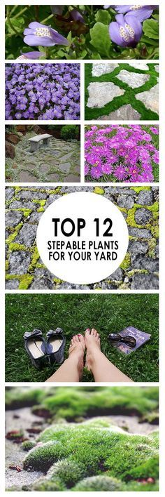 Top 12 Stepable Plants for Your Yard ~ Bees and Roses If you don't enjoy tip toeing around your yard to avoid your plants, it may be time to bring in some shrubs that tolerate foot traffic. Here are 12 stunning plants that stand up well when walked on. Perennial Ground Cover, Ground Cover Plants, Garden Shrubs, Garden Edging, Shade Garden, Garden Beds, Garden Plants, Home Landscaping, Front Yard Landscaping