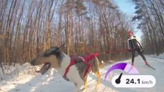 Mushing s TomTom Bandit Snow, Dogs, Youtube, Outdoor, Animals, Outdoors, Animales, Animaux, Pet Dogs