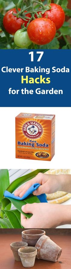 17 Clever Baking Soda Uses for the Garden.