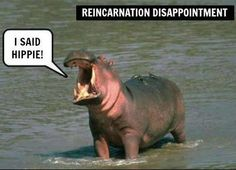 Reincarnation Disappointment