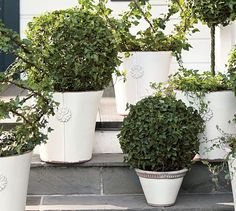 Live Ivy Globe Topiary #potterybarn  love these to flank the front stairs in front of the porch columns