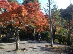 Tenryu temple in Kyoto |Pinned from PinTo for iPad|