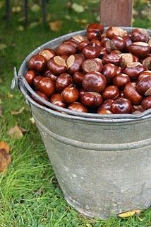 CONKERS - BUCKEYES  Conkers is a traditional British children's game played using the seeds of horse-chestnut trees – the name 'conker' is also applied to the seed and to the tree itself.  The Eurasian species are known as horse chestnuts while the North American species are called buckeyes.