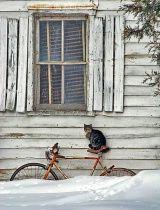 Cat in the snow.