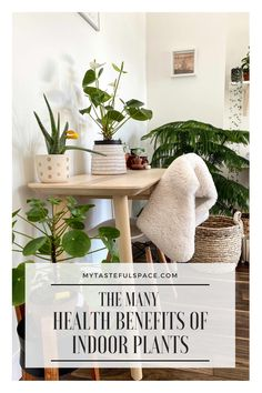How indoor plants make you happy and improve your physical and mental health. How indoor plants make you happy and improve your physical and mental health. Indoor Plant Pots, Best Indoor Plants, Benefits Of Indoor Plants, Common House Plants, Rustic Outdoor Decor, Indian Arts And Crafts, Plant Health, Paper Light, Types Of Furniture