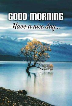 Good Morning Beautiful Images, Good Morning My Love, Good Morning Picture, He's Beautiful, Good Day, Reindeer Run, I Love You Images, Take Shelter, The Shepherd