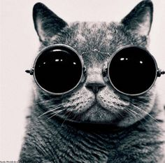 I never really liked the whole cat in glasses thing, but for this, I make an exception.