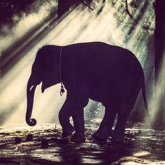#Elephant #Thailand #chailaiorchid