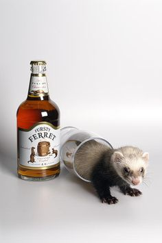 A Glass Of Fursty Ferret Poster By Howard Kennedy