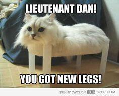 Lieutenant Dan got new legs - Funny cat sitting on a small plastic table looking like Lieutenant Dan from Forrest Gump.