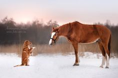 let's be friends Photo by Anna Averianova — National Geographic Your Shot Farm Animals, Funny Animals, Animals Kissing, International Dog Day, National Geographic Photography, Nova Scotia Duck Tolling Retriever, Herding Dogs, Horses And Dogs, Dog Park