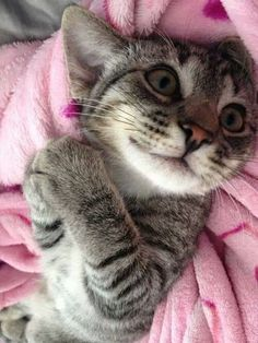 This kitten is too cute!!!