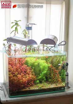 71 best dutch style images planted aquarium fish tanks aquarium rh pinterest com