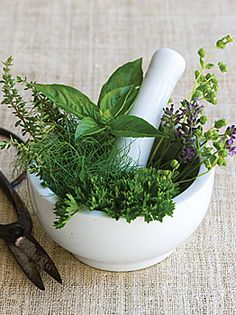 Herbs de Provence Collection - Basil, Lavender, Marjoram, Thyme, Chervil, Fennel & Savory.  Plants available.