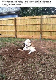 That is one serious hole! Does your dog dig holes all over your yard? Check out these tips: https://www.animalhub.com/how-to-keep-a-dog-from-digging/