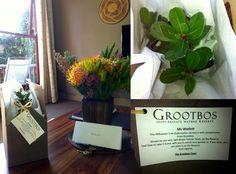 Your #Grootbos Moments [Week 41]   Grootbos - Lauren Wallett #Fynbos #Flowers http://www.grootbos.com/en/blog/travel/your-grootbos-moments/week-41
