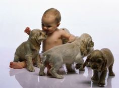 PEDRO HITOMI OSERA: Cães e bebês: veja dicas para uma convivência tran...