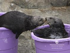 Be kind to otters.