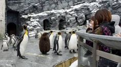Nice weather — for penguins