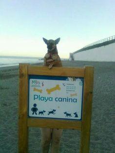 Playa Canina de Fuengirola.