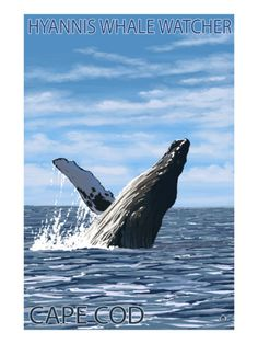 Hyannis Whale Watcher - Cape Cod, MA Posters at AllPosters.com