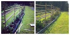 Which Blackberry Plants to Trellis - also Lots of good information in the Q & A section at the bottom of the page.