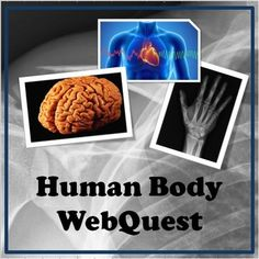 Human Body: Body Systems WebQuest - Systems that are covered include: Skeletal, Muscular, Circulatory, Respiratory, Nervous, and Digestive.This Webquest helps students explore the human body through websites that feature interactive games, activities, videos, and text.