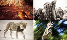 The breathtaking pictures were taken by Heinrich Van Den Berg, 43, from Johannesburg, as he travelled from country to country documenting the continent's spectacular and diverse wildlife.