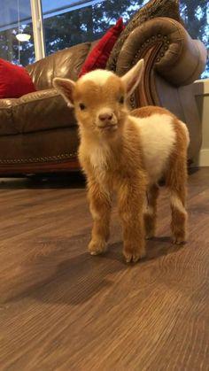 Baby Farm Animals, Cute Wild Animals, Baby Animals Super Cute, Cute Baby Dogs, Baby Animals Pictures, Cute Little Animals, Cute Funny Animals, Animals Beautiful, Animal Babies