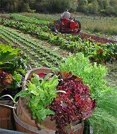Can organic farming feed the world?