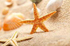 Google Image Result for http://static6.depositphotos.com/1003860/651/i/950/depositphotos_6518788-Starfish-and-sea-shells-on-sand.jpg
