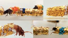 Hubert Duprat's incredible collaborations with Caddis Flies. One of my favourite ever works.