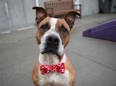 RED - 21030 - - Brooklyn  TO BE DESTROYED 02/26/18 **NEW HOPE RESCUE ONLY** -  Click for info & Current Status: http://nycdogs.urgentpodr.org/red-21030/