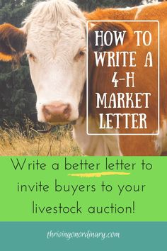 Guide to writing a buyer letter. Tips for writing a better market letter. Sales auction at the fair. and FFA animal projects. Teaching Life Skills, Writing Skills, Writing Tips, Livestock Judging, Showing Livestock, Showing Cattle, Fair Projects, Animal Projects, Ffa