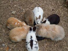 Bunnies plot their world domination - May 23, 2012