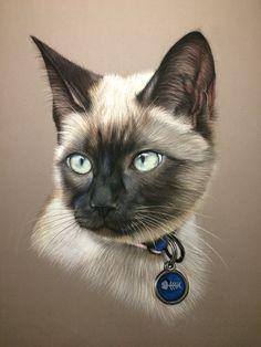 Dessin animalier: Chat siamois réalisé au pastel sur commande