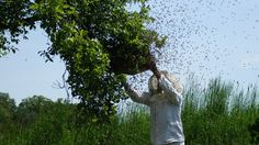 #Bienen, #Imker, #Umweltschützer – Die Honigmacher von Schloss Tonndorf |  Eine tolle fünfteilige Dokumentation über das Arbeitsjahr heimischer Bio-Imker, Umweltaktivisten, Gen-Pflanzen-Gegner und natürlich der Bienen. Prädikat sehr gelungen!